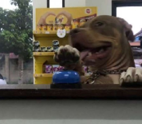 Demanding dog rings bell at pet store