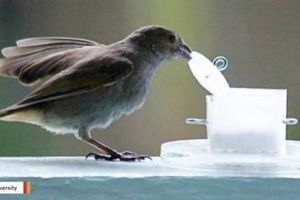 City birds prove to be smarter than their country counterparts
