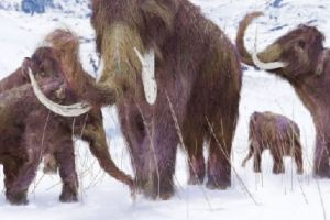 Woolly Mammoths will roam new Jurassic Park-style theme park with cave lions and extinct horses in ten years, Russian scientists say