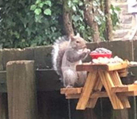 Man's tiny picnic table for squirrels goes viral, prompts people in quarantine to build their own