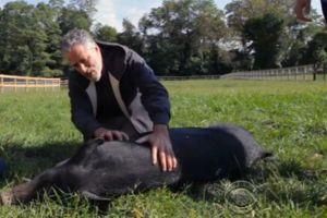 A sneak peek at Jon Stewart's animal rescue farm