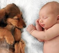 How to introduce cats and dogs to a new baby