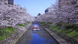 30 places to visit during cherry blossom season