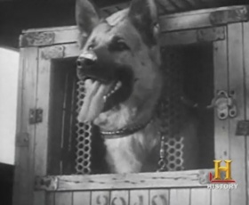 1942 U.S. Army launches K-9 Corps